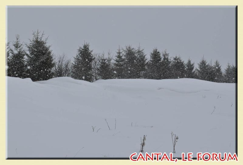Photos du Cézallier en Février 2012 Dsc_8911