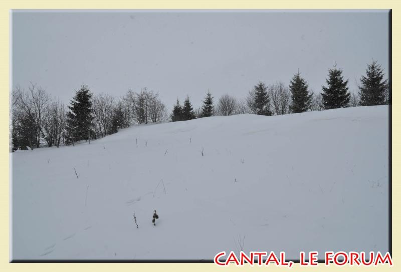 Photos du Cézallier en Février 2012 Dsc_8912