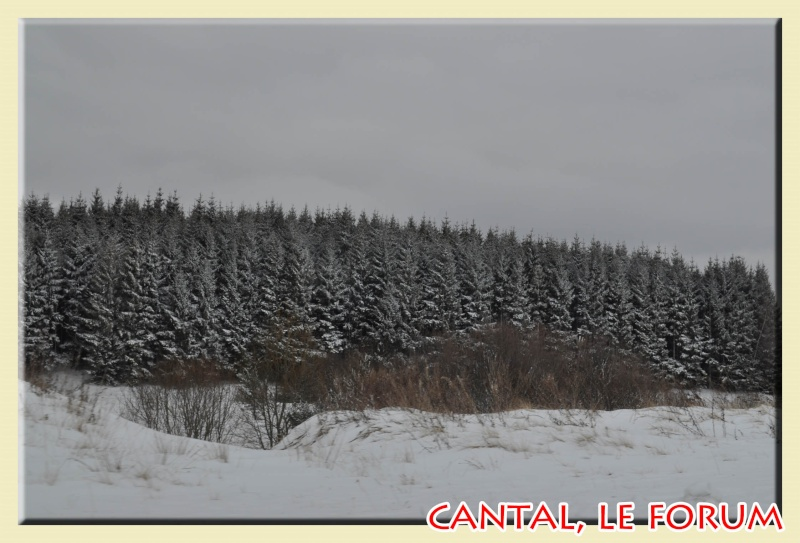 Photos du Cézallier en Février 2012 Dsc_9012
