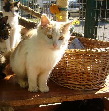 BIGIN Europeen roux et blanc 250269801756851 P1100416