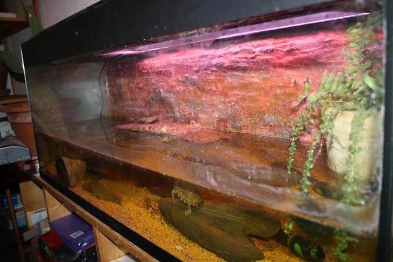 aquarium de mes Sternotherus carinatus Img_1910