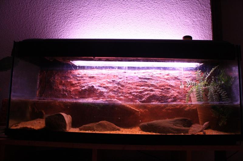 aquarium de mes Sternotherus carinatus Img_2010