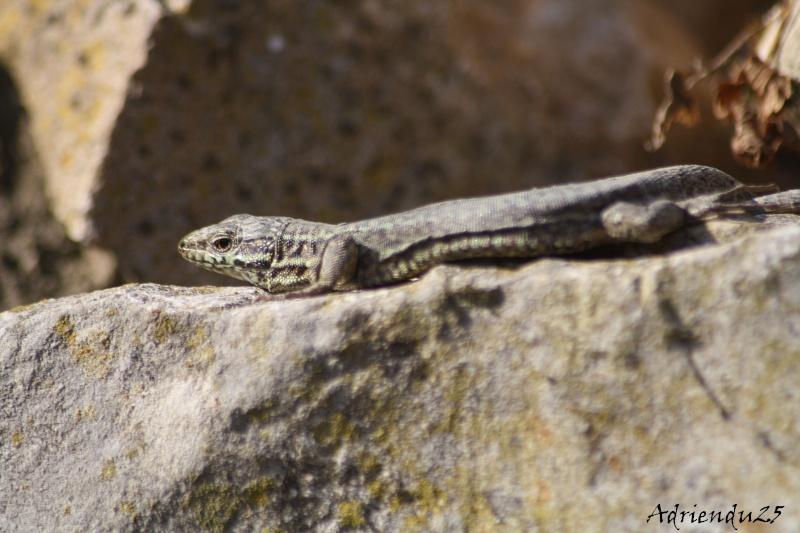 Le réveil des reptiles ! Img_4710