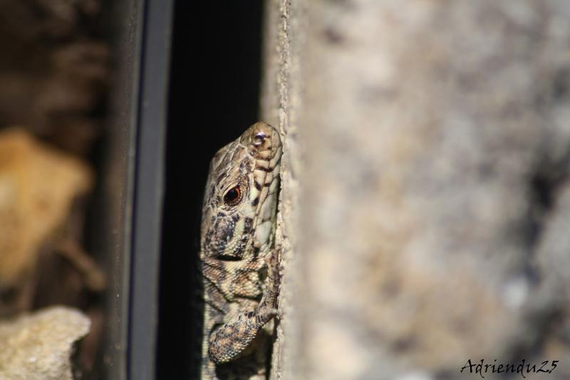 Le réveil des reptiles ! Img_4711