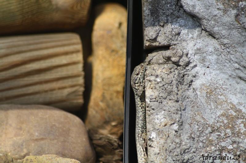 Le réveil des reptiles ! Img_4712