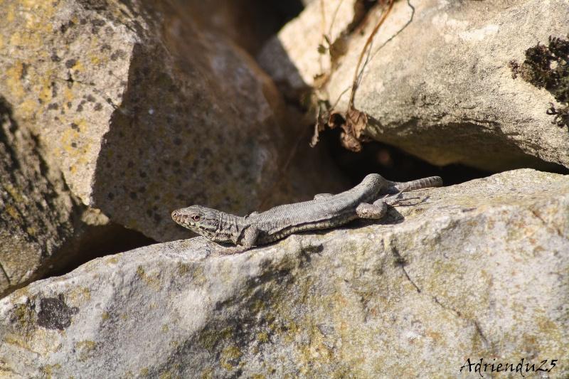 Le réveil des reptiles ! Img_4713