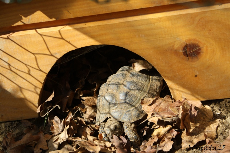 Le réveil des reptiles ! Img_4715