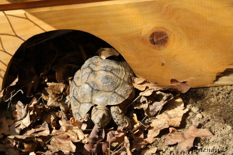 Le réveil des reptiles ! Img_4716