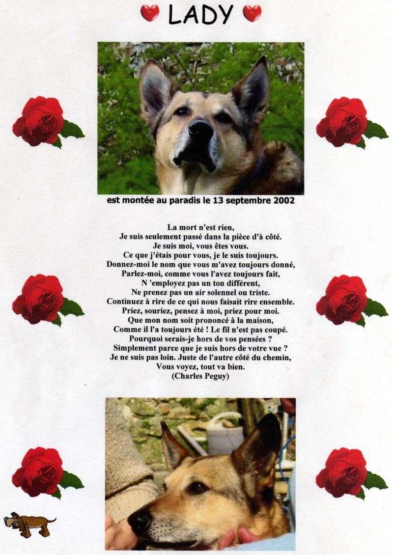 Hommage à Lady mon amour de chienne Img14210