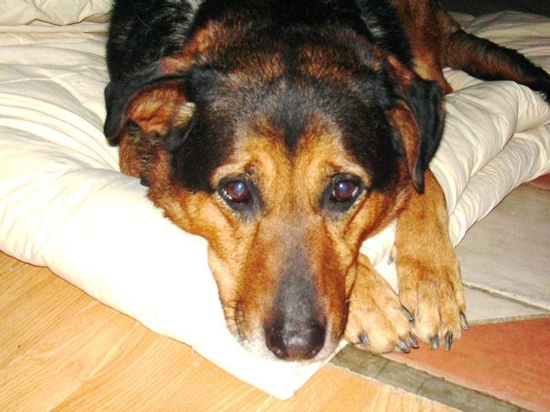 Nouvelles de SHONA- Adoptée en mars 2010. Shona10