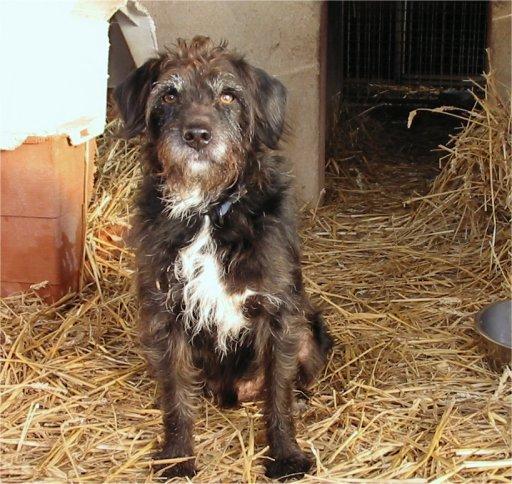 Papotage sur les chiens qui bénéficient de l'Opération Doyen Tchouk10