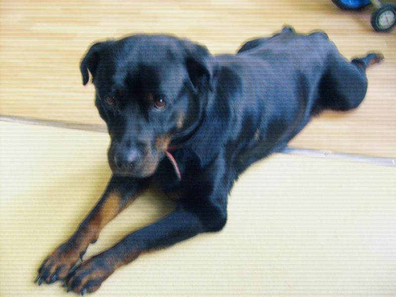 Shana, femelle de 2006 (72)  S6300312
