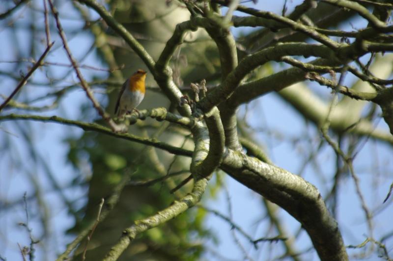 Quel matériel pour photographier les oiseaux _igp7510