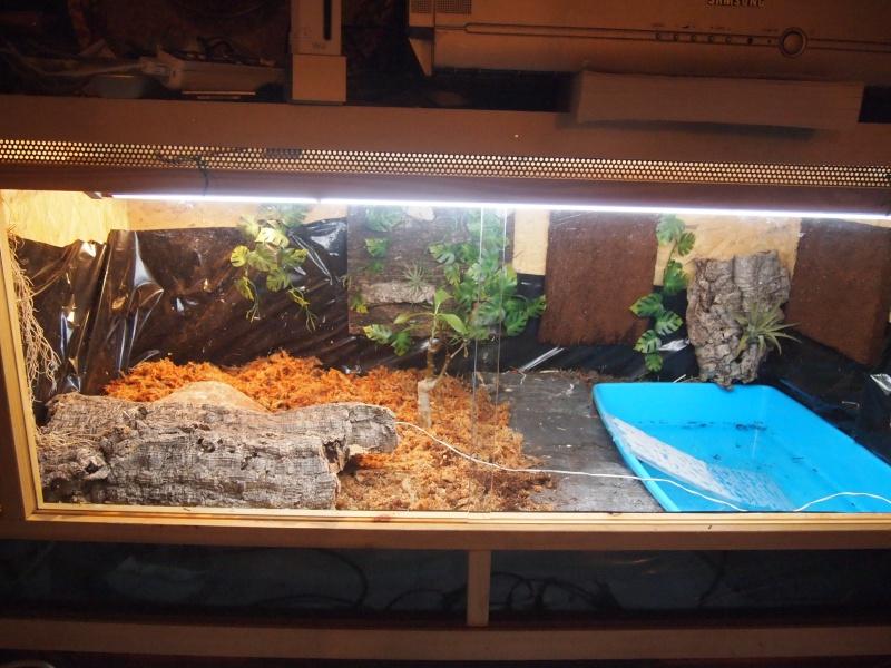 New maison pour mes futures Cistoclemmys flavomarginata!!! - Page 2 P1011115