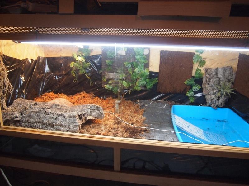New maison pour mes futures Cistoclemmys flavomarginata!!! - Page 2 P1011116