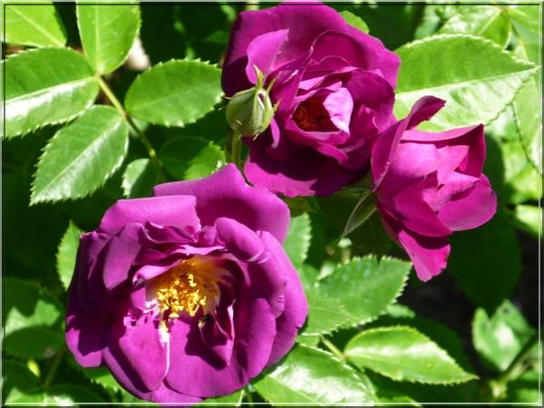 toutes les fleurs de couleur violette, bleue,  107210