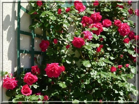 Que des fleurs  8655310