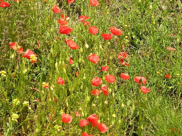 Que des fleurs  Dscn1522