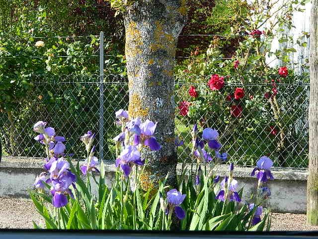 toutes les fleurs de couleur violette, bleue,  Dscn1539