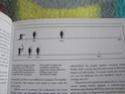 Fiche résumée Japon Sengoku - Page 2 P1010212