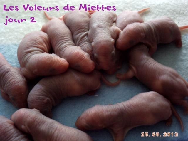 Les Voleurs de Miettes - Page 3 Pict0024