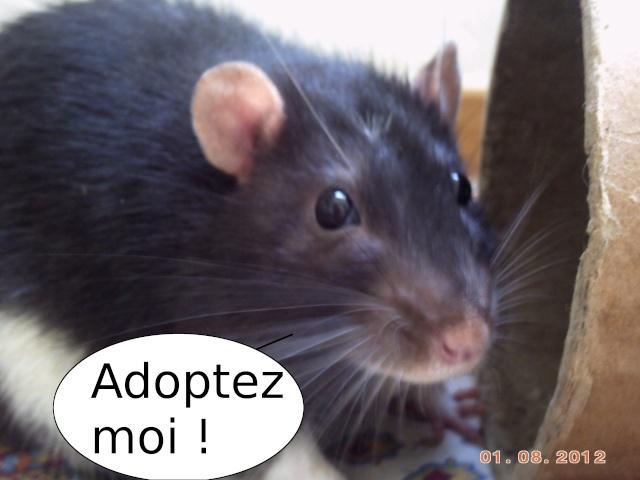 [Site sur les animaux] Les Voleurs de Miettes - Page 3 Pict0038