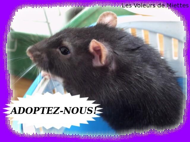 [Site sur les animaux] Les Voleurs de Miettes - Page 3 Pict0118