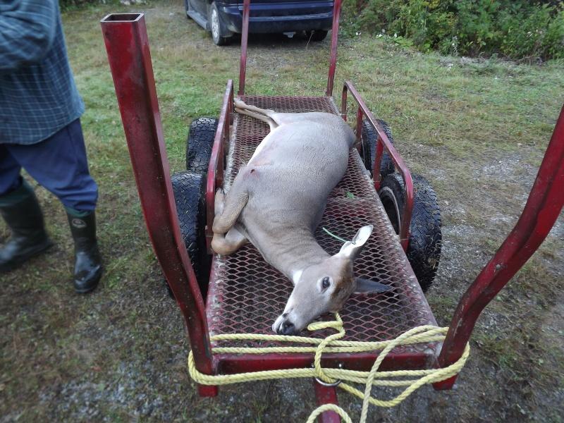Ouverture chasse chevreuil arbalète 2011 Dscf1012