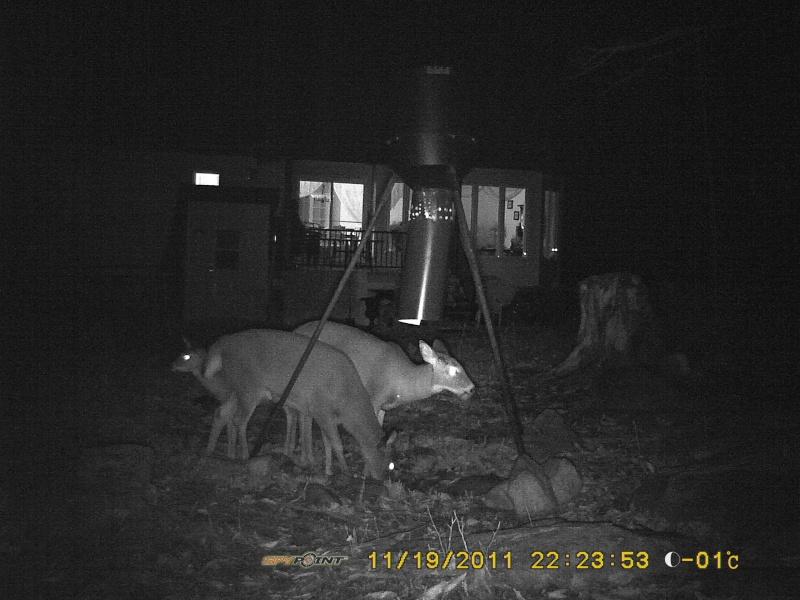 Quelques chevreuils en arrière de chez moi. Tikka_14