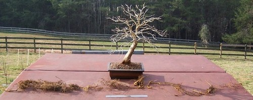 Fastest and Strongest Root System 2007_a10