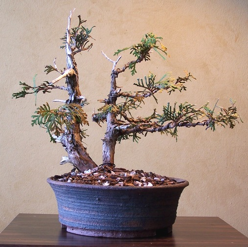 Out-of-its-comfort-zone Thuja 3-12_e10