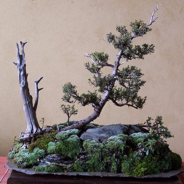 virginia pine and eastern red cedar 3-12_t10