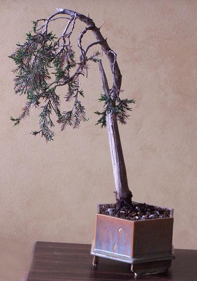 virginia pine and eastern red cedar 3-12_w10