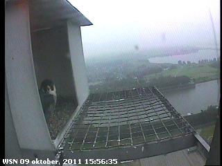 Nijmegen/Centrale Gelderland 2012 Cg2138