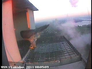 Nijmegen/Centrale Gelderland 2012 Cg2141