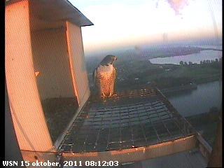 Nijmegen/Centrale Gelderland 2012 Cg2142