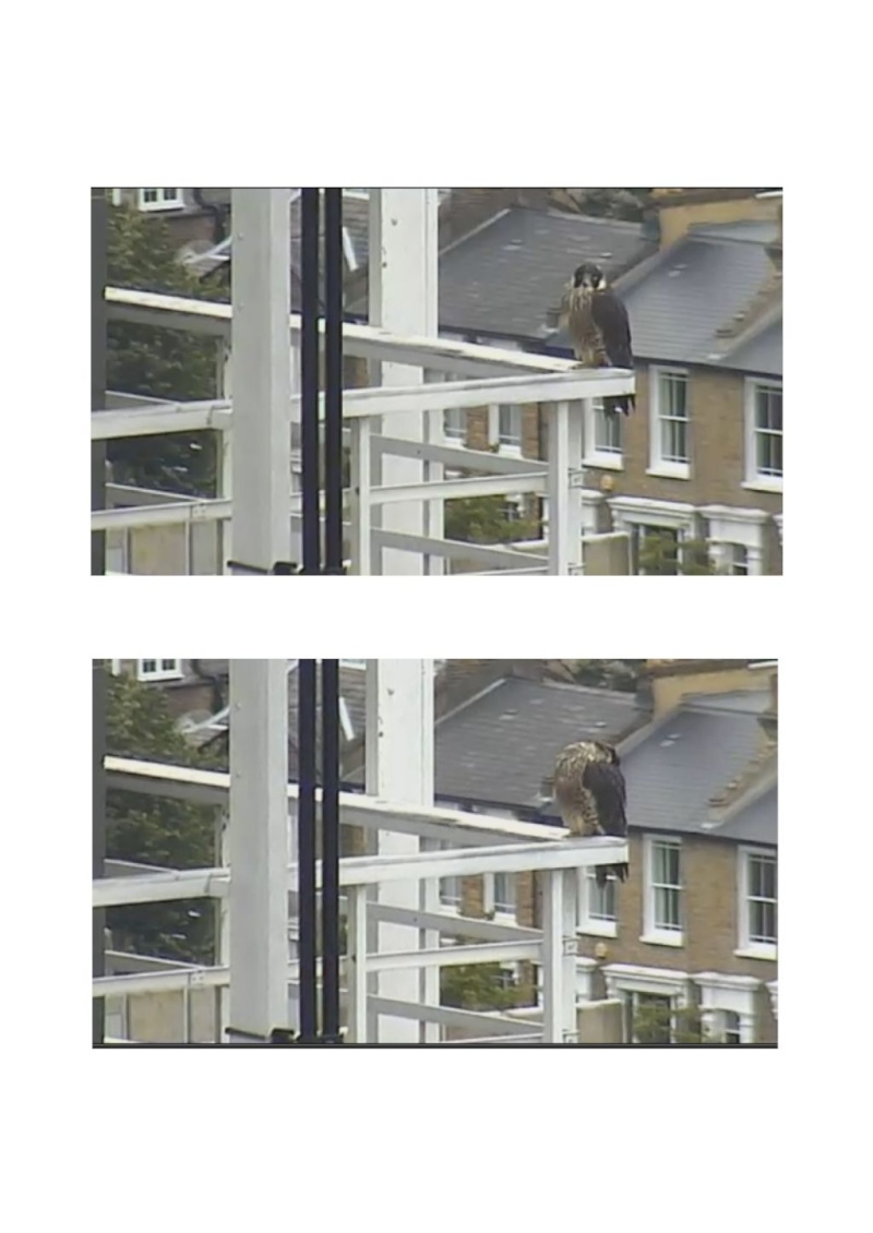 Fulham Charing Cross Hospital  2012 - Pagina 5 F110