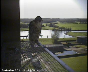 Zwolle /IJsselcentrale 2012 Hc290
