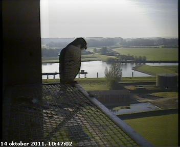 Zwolle /IJsselcentrale 2012 Hc293