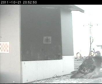 Den Bosch 2012 Image192