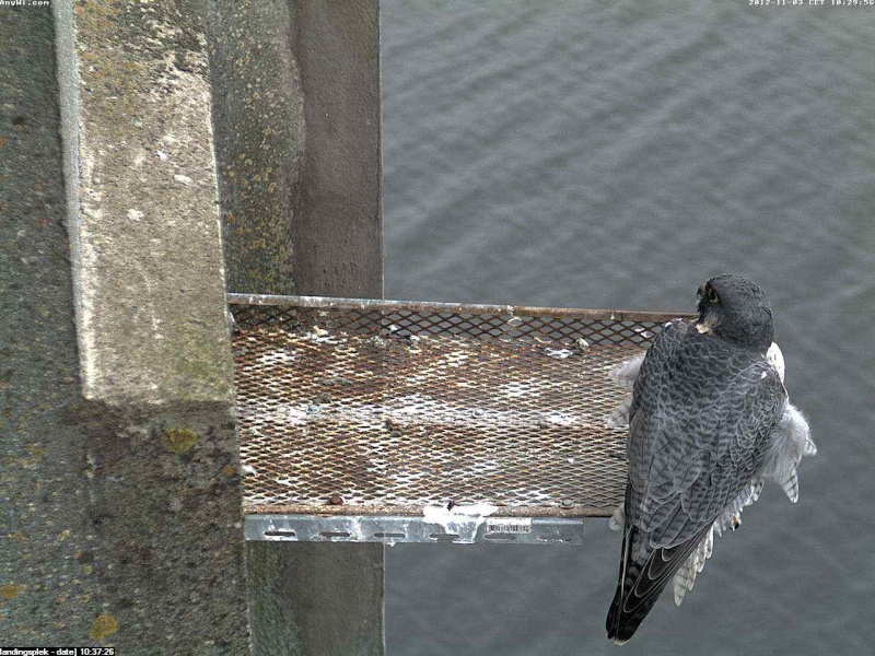 Aalsmeer/Watertoren.  Youngster en Sleggie /Sidonia Image465