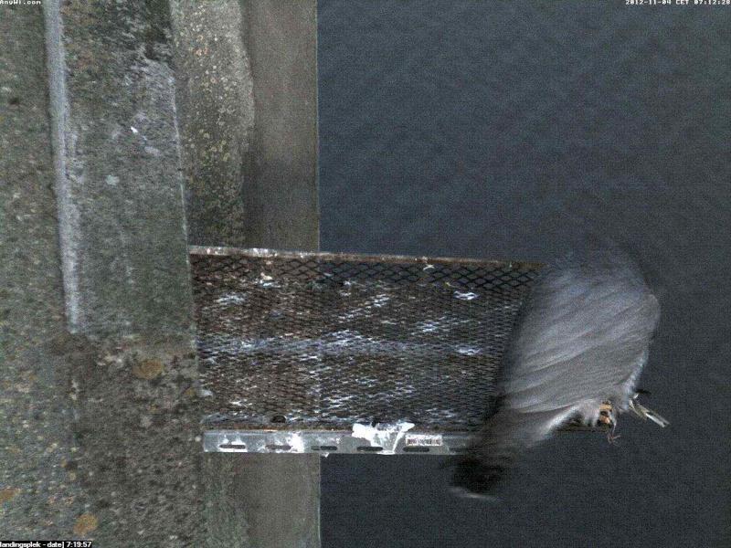 Aalsmeer/Watertoren.  Youngster en Sleggie /Sidonia Image466