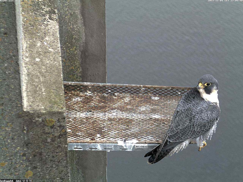 Aalsmeer/Watertoren.  Youngster en Sleggie /Sidonia Image468