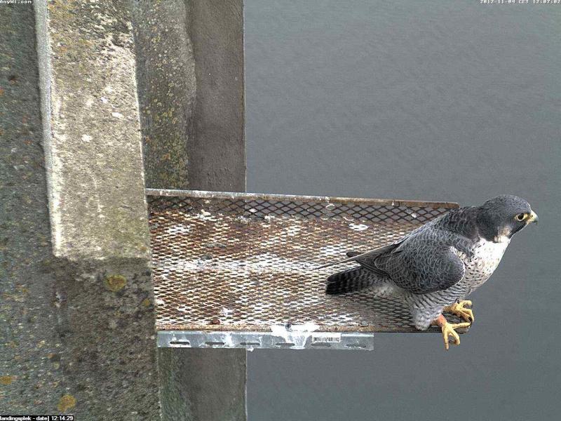 Aalsmeer/Watertoren.  Youngster en Sleggie /Sidonia Image469