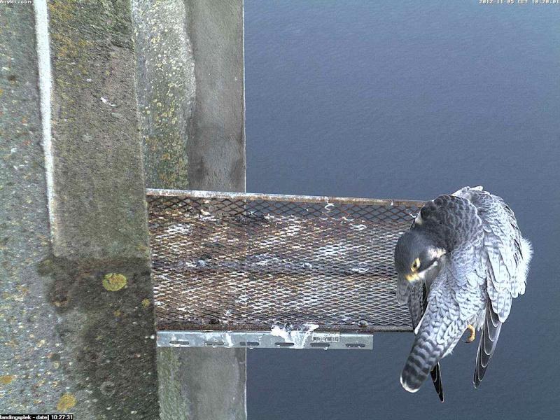 Aalsmeer/Watertoren.  Youngster en Sleggie /Sidonia Image471