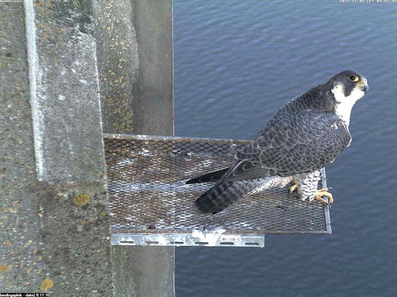 Aalsmeer/Watertoren.  Youngster en Sleggie /Sidonia Image475