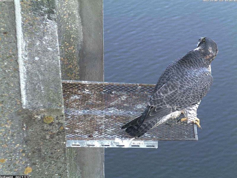 Aalsmeer/Watertoren.  Youngster en Sleggie /Sidonia Image476