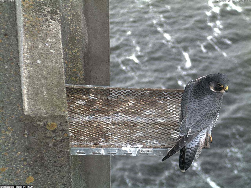 Aalsmeer/Watertoren.  Youngster en Sleggie /Sidonia Image481