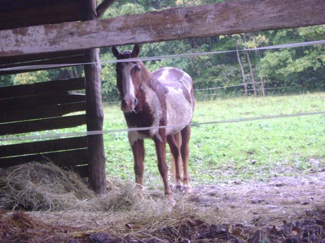 WALANIE (VANILLE) - ONC poney - adoptée en avril 2011 par voulk  - Page 5 00110
