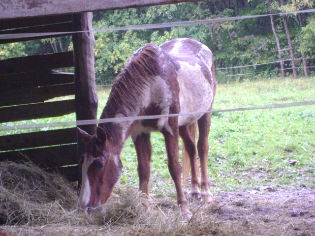 WALANIE (VANILLE) - ONC poney - adoptée en avril 2011 par voulk  - Page 5 00210